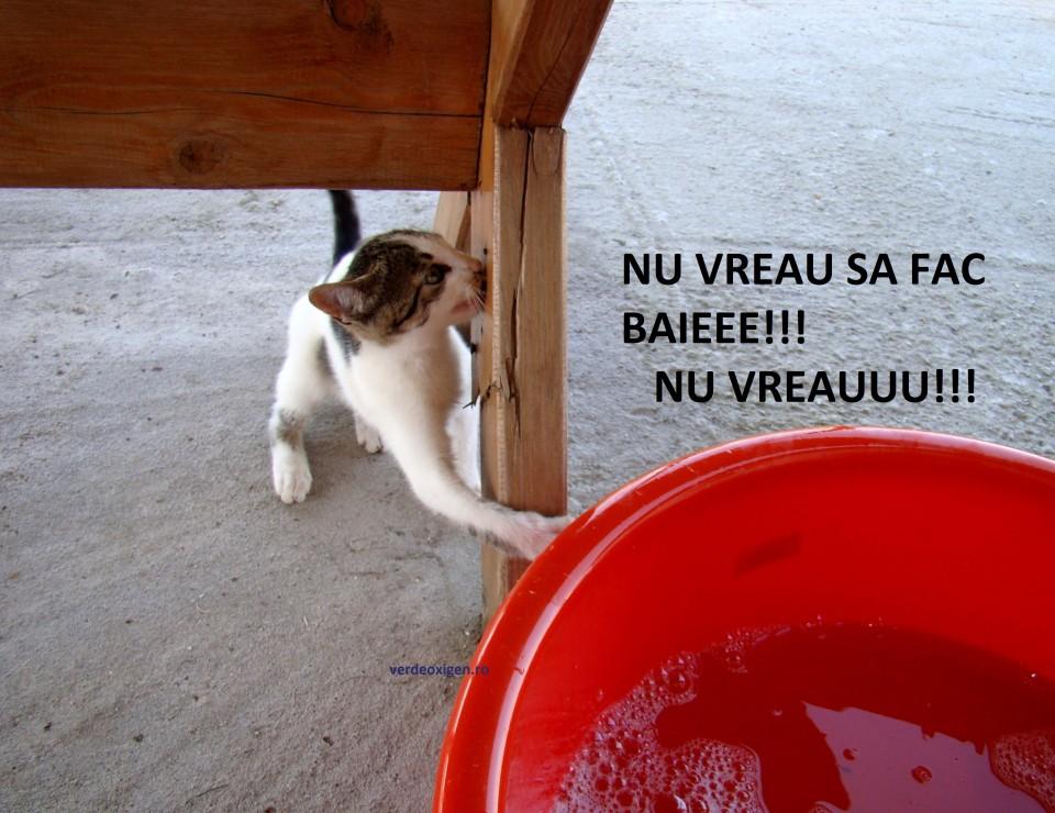 Pisicuta Kitty
