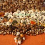 Cum sa recoltezi ciuperci de padure: Reguli si sfaturi utile pentru ocrotirea ta si a padurii