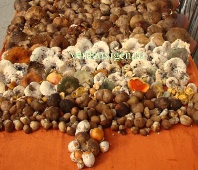 multe ciuperci padure