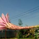 Floarea de cactus din gradina Silviei