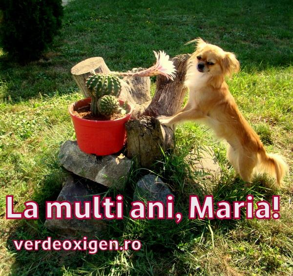 La multi ani, Maria!