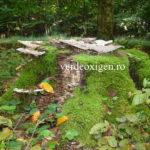 Masa din Tacerea Padurii: Moda copacilor e nemuritoare