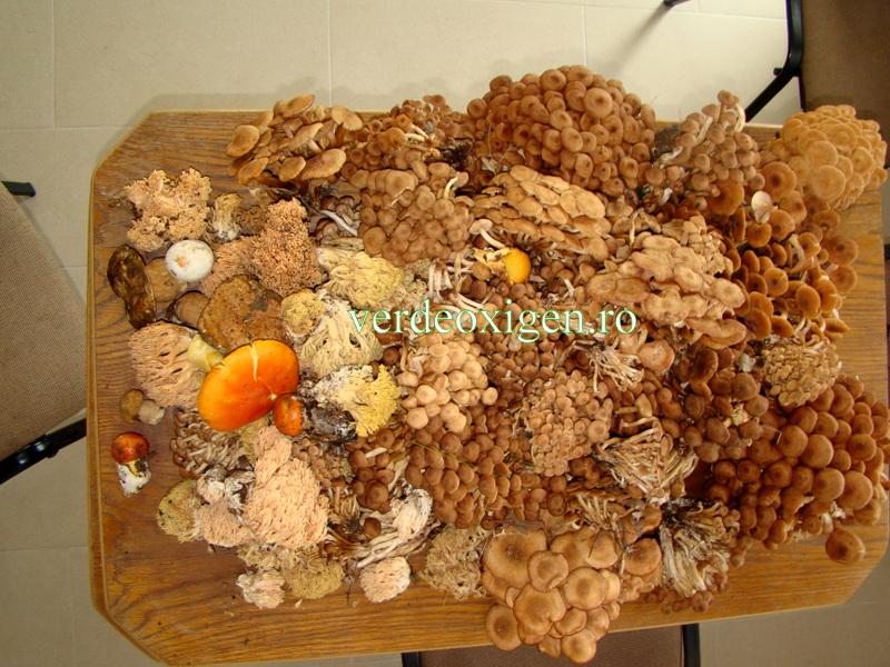 diferite ciuperci padure