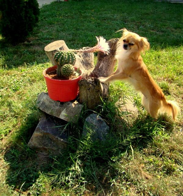Luna si cactusul