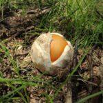 Oul ochi al pădurii: Puișor de crăiță