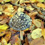 Magica ciupercă sălbatică: Frumusețea ireală din mijlocul pădurii