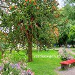 Prin parcul din insula Lindau, Germania